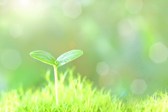 労務問題は「小さな芽」のうちに摘み取っておくことが大切です